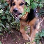За уличните кучета в България