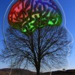 Фитопсихофармакология на човешкото поведение